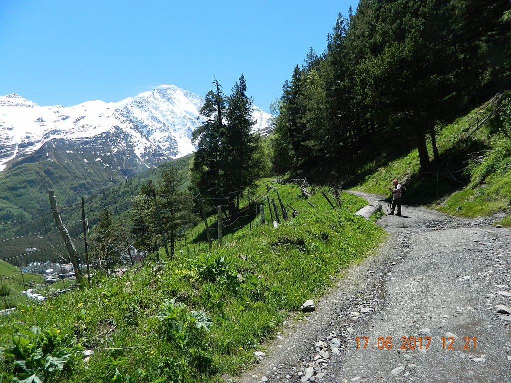 Дорога на Девичьи косы через лес
