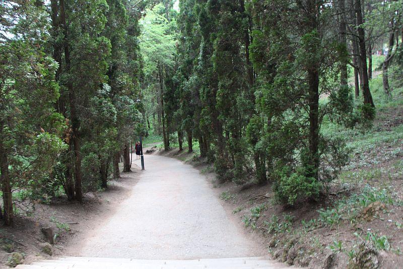 Дорожки в парке.