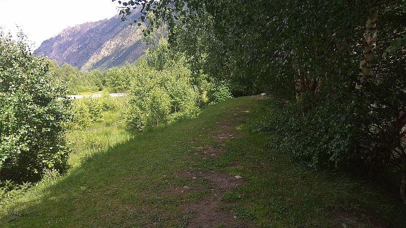 Участок дороги за деревьями.