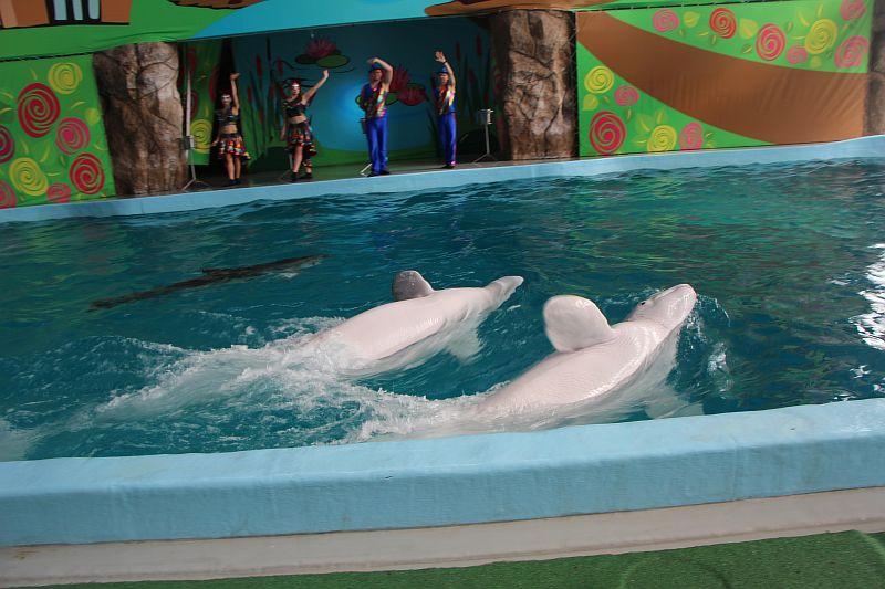 Лазаревский дельфинарий.