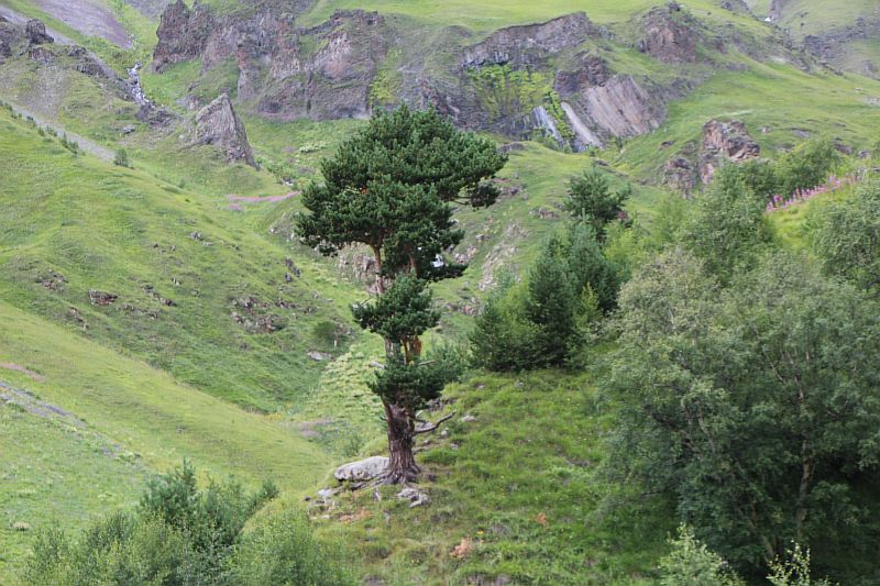 Просто дерево.