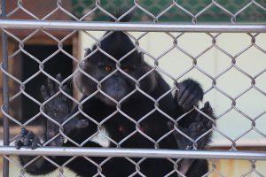 Экскурсия в обезьяний питомник Адлер.