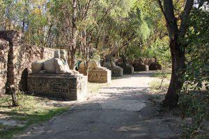 Сафари Парк.