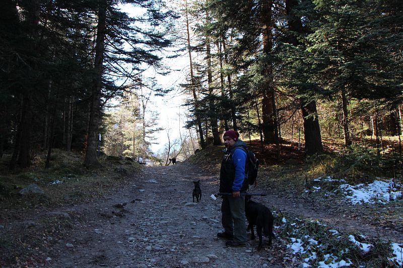 Путь к озеру через лес