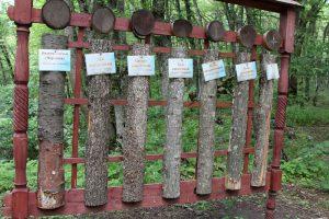 Образцы коры деревьев.