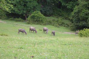 Долина буйволов.